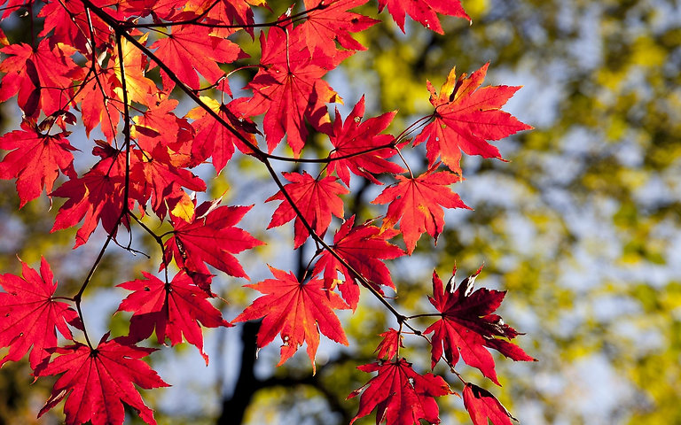 autumn-leaves-2789234_1920-1920x1200.jpg