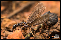 Ant & Termite