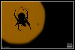 Spider silhoutte