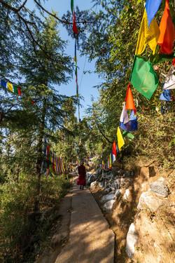 A walk along Kora path