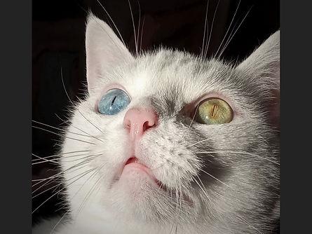 Cat's eyes - A Darley.jpg