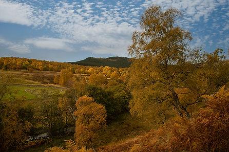 Autumn Gold Jane Morris Abson.jpg