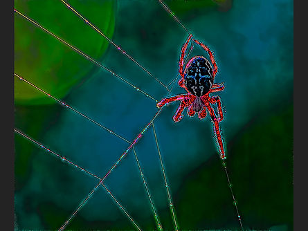 Psychedelic Spider Jane Morris Abson.jpg