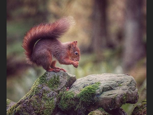 Hungry Squirrel.mvickerman 1ST.JPG