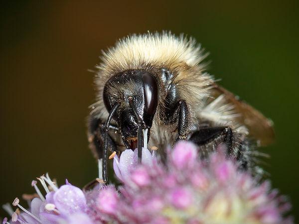 122 Bumble Bee copy.jpg