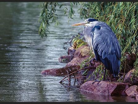 Gone Fishing  Sue White.jpg