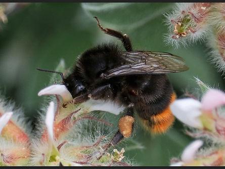 Nov HC Honey, honey' - Copy.jpg