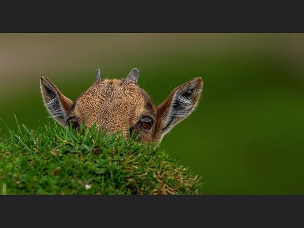 Peek a Boo I See You   Sue White.jpg