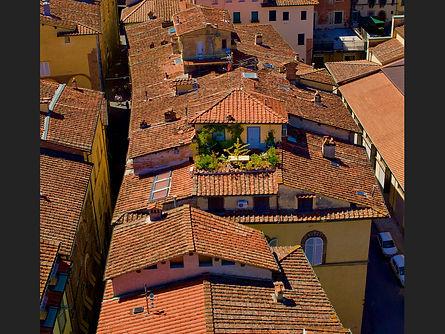 29 roof top gardening.jpg