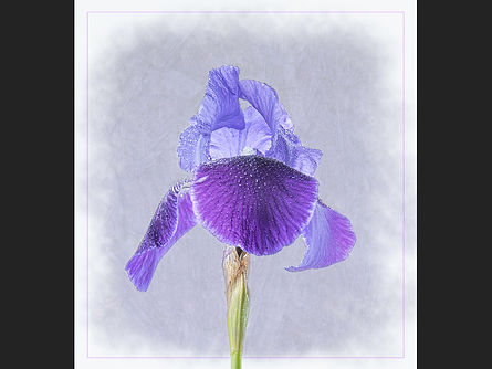 Iris Jane Morris Abson.jpg