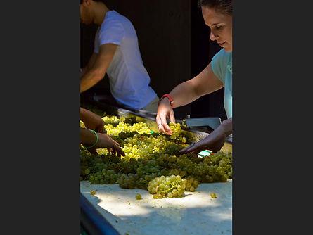 25  The Harvest Judith Henley.jpg