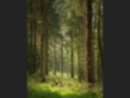 Gilling Wood Steven Kossowicz.jpg