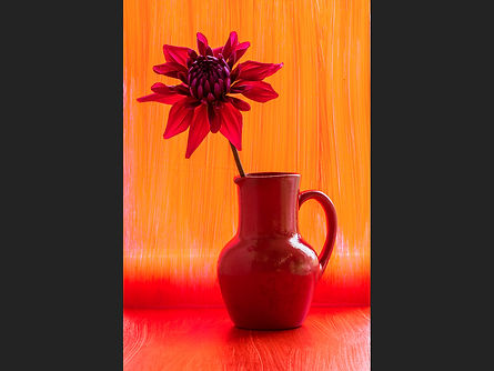 Red dahlia in a red jug Chris Houghton.j