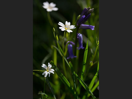 Springtime (Dave Handson) C.jpg