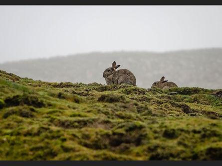 C Rabbits in the morning mist Inesa L.jp