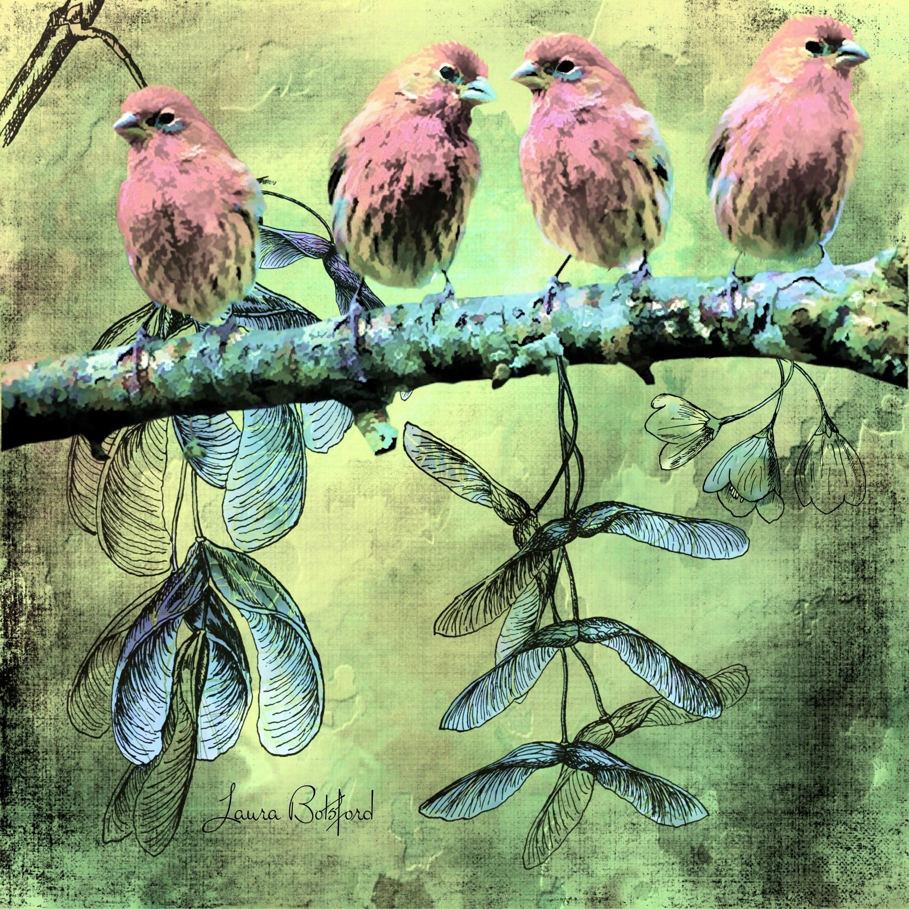 Birds of  Like Minded Feathers