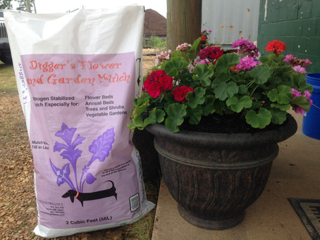 Add Mulch to Containers to Hold Moisture