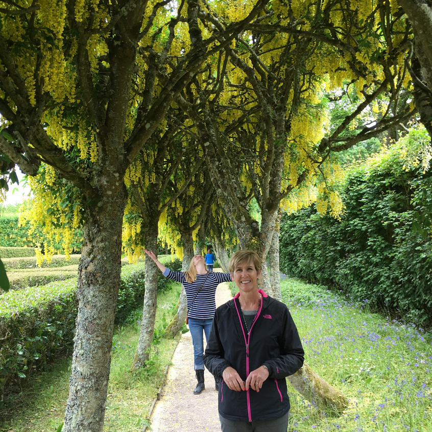 Golden Chain Trees in full bloom at Cawdor Castle gardens.