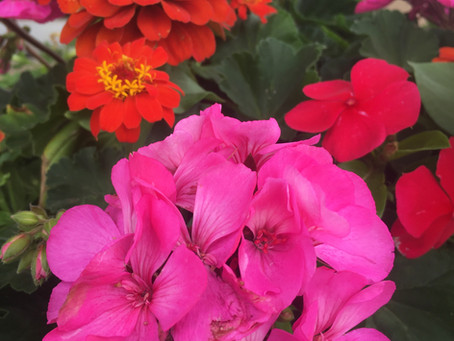 Plant Love!