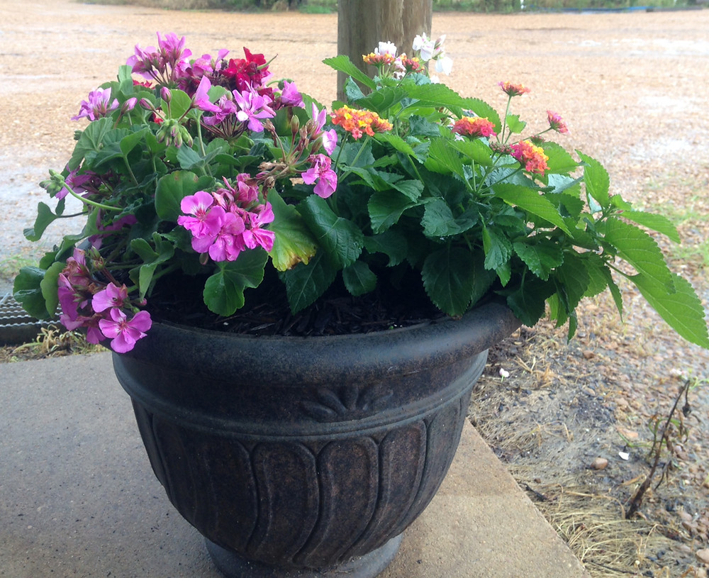 Beautiful Container Plantings