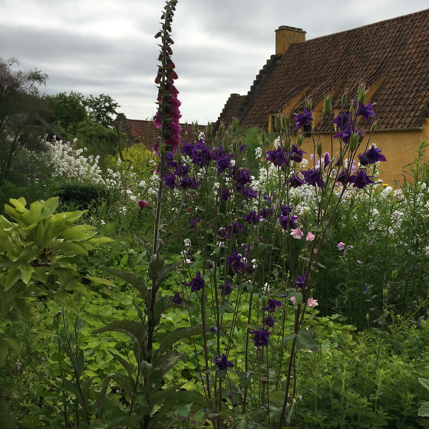 A wide array of flowers at Culross Palace, Scotland.