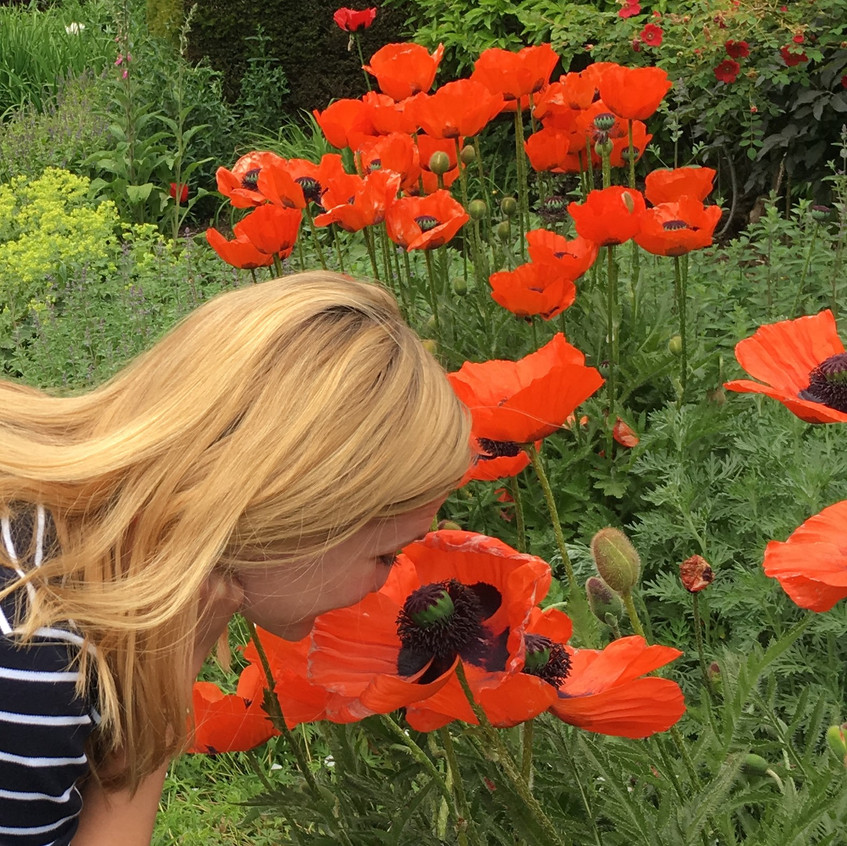 The Oriental Poppies at Cawdor Castle were the biggest we have ever seen!