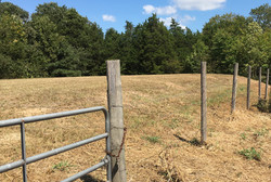 Penick Fence Posts