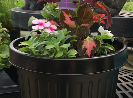 Digger's Garden Boxes:  Easy Containers for You!