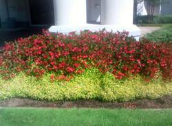 Flower and Garden Mulch