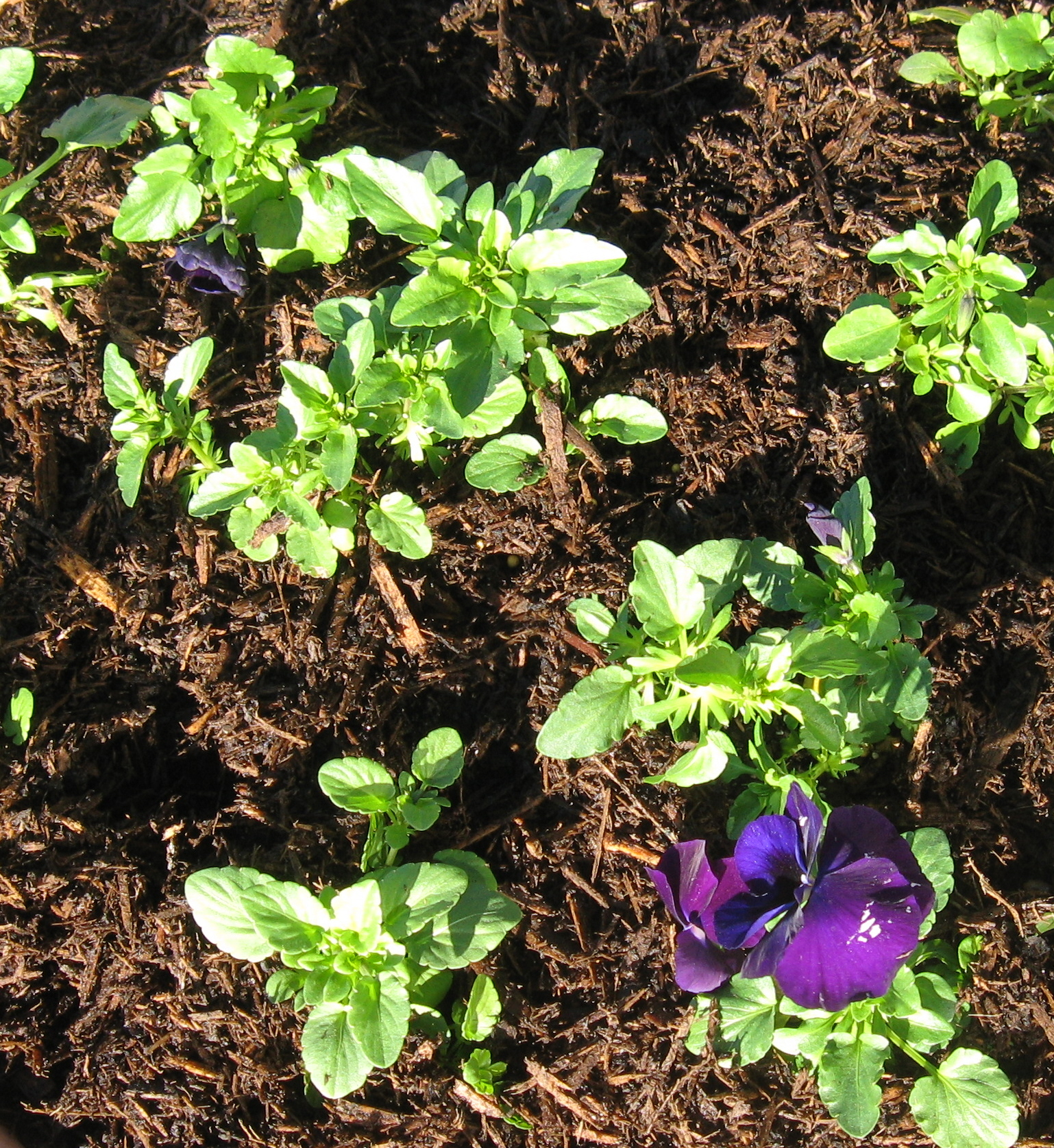 Flower and Garden Mulch