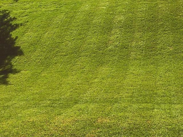 Clean Cut Bermuda Lawn