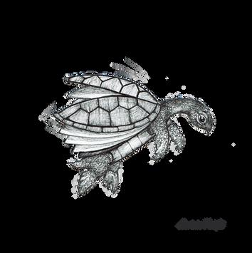 flying turtle sketch