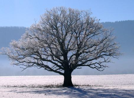 Winter Yoga Morning Retreat - Dunsden February 2019