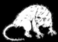 opossum.png