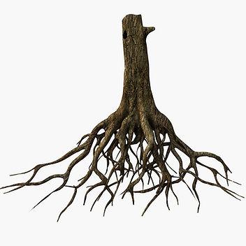 TreeRootsAnatomy.jpg