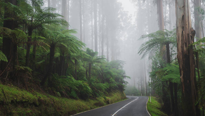 Some of the best scenic drives in Victoria