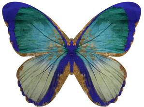Wings of Love III