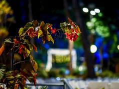 גן אירועים קטן - גן החורשה, קיבוץ יגור