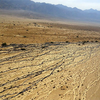Soil Remidiation