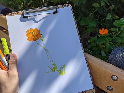estedfeld_orangeflower.jpg