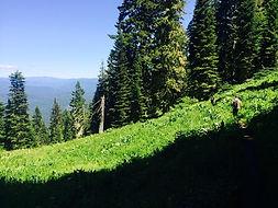 North Umpqua Trail, hike guide, mountain biking, crater lake, bike guide, shuttle, umpqua biking