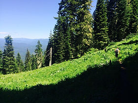 North Umpqua Trail, mountain biking, bike guide, shuttle, tour guide, tours, crater lake