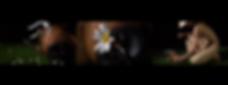 螢幕快照 2020-03-08 上午1.00.56.png