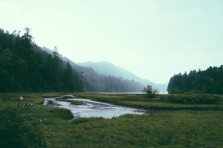 paisaje del bosque