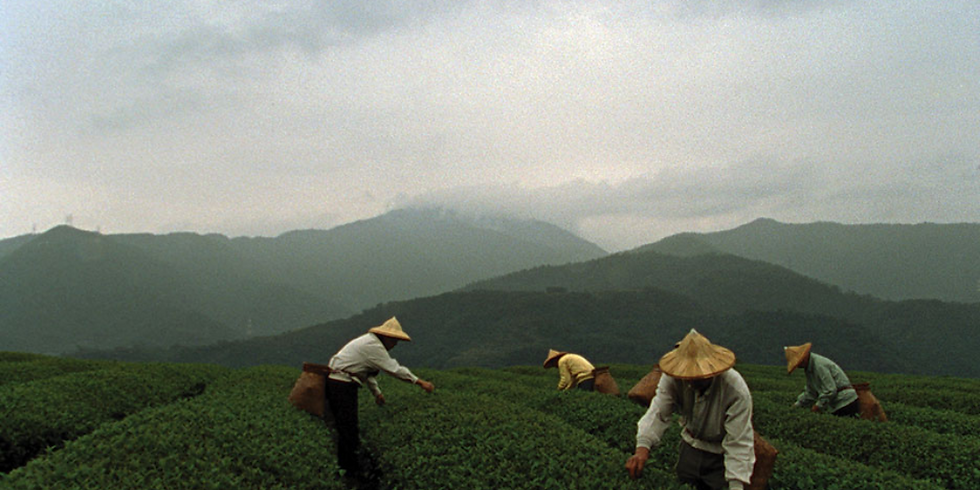 Virtual Film Screening of 'The Meaning of Tea' plus Q&A Session