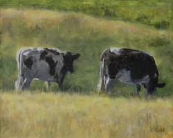 Two Cows    8x10 acrylic on canvas steve