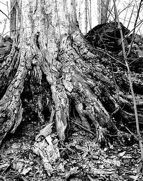 root_.jpg