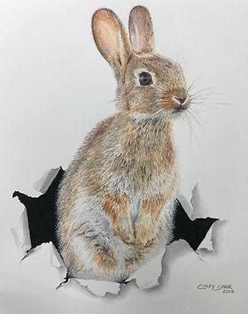 rabbithole.jpg