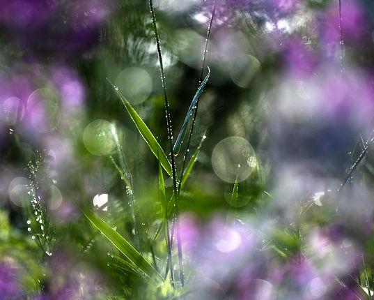 Janene Bouck_Phlox and Sawgrass_Photography_6-9-21_8x10..jpg