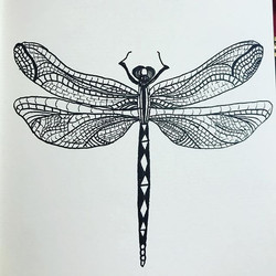Dragonfly Ink drawing started